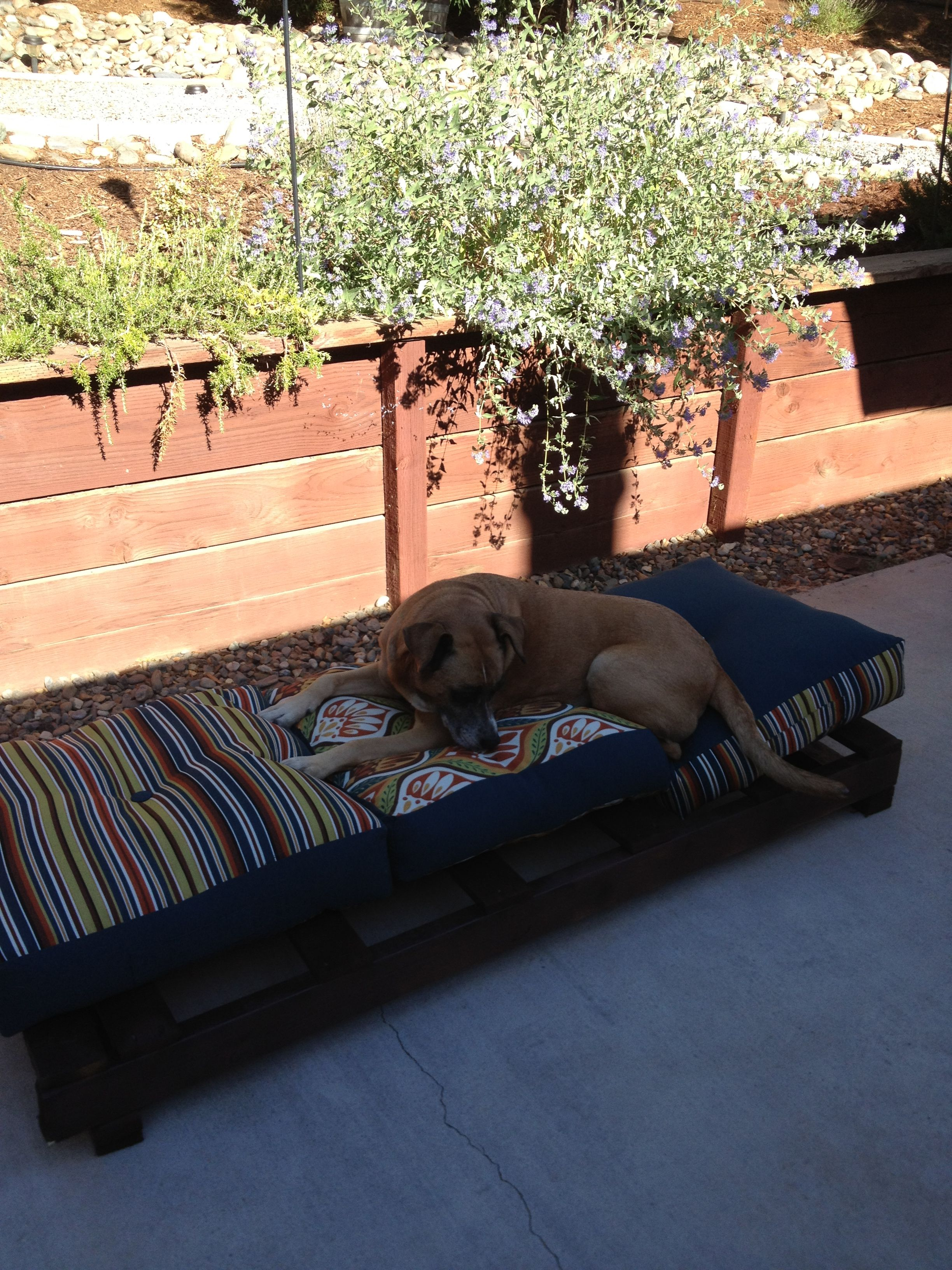 Dog Garden Lounger. Spray Painted Pallet Patio