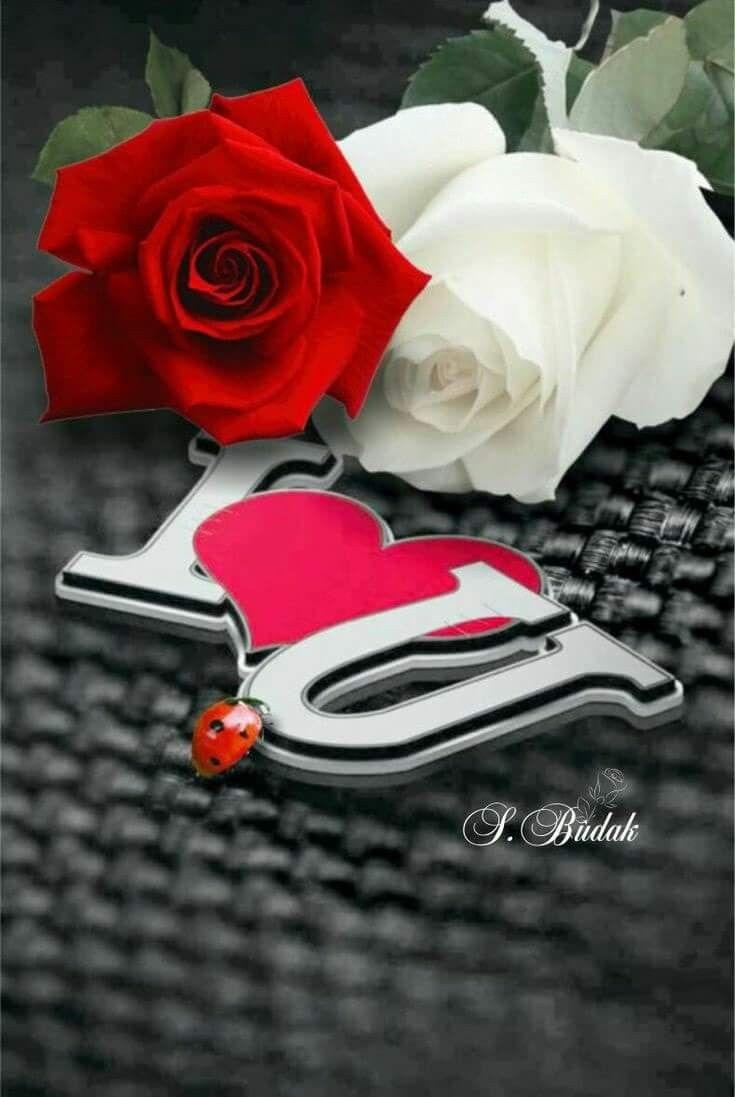 Poemas De Amor Osos Rosas Y Corazones Con Imagenes Corazones Rosados Corazones De Amor