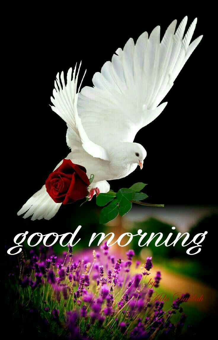 Have A Nice Day Dove Pictures Dove Images Holy Spirit Dove