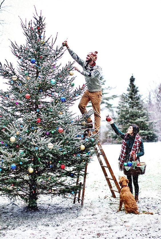 Decorating Christmas Trees Outside.Do You Have To Go Home For The Holidays Baby It S Cold