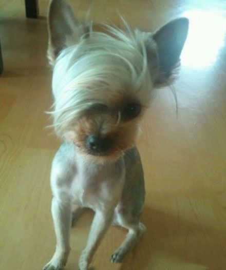 Pin By Dinnel Com On Don T Say Anything Just Love Me Funny Animal Pictures Cute Animals Dog Haircuts