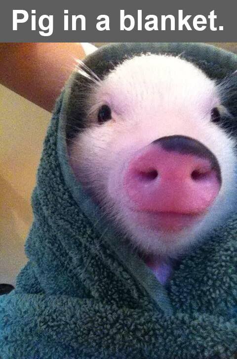 Pig in a blanket | y u so cute? | Pinterest | Blanket ...