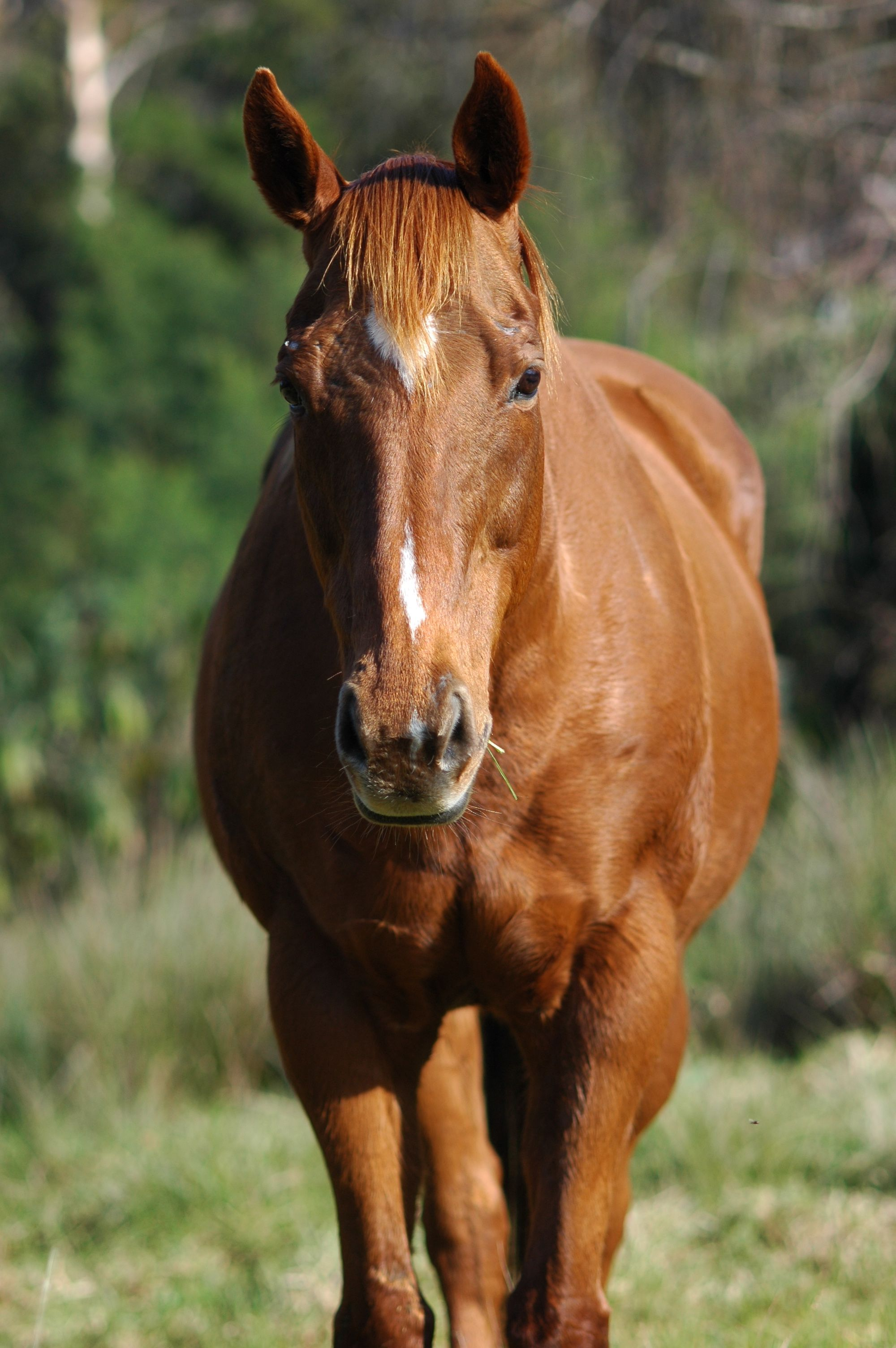 Front view horses pinterest horse creatures and animal front view sciox Choice Image
