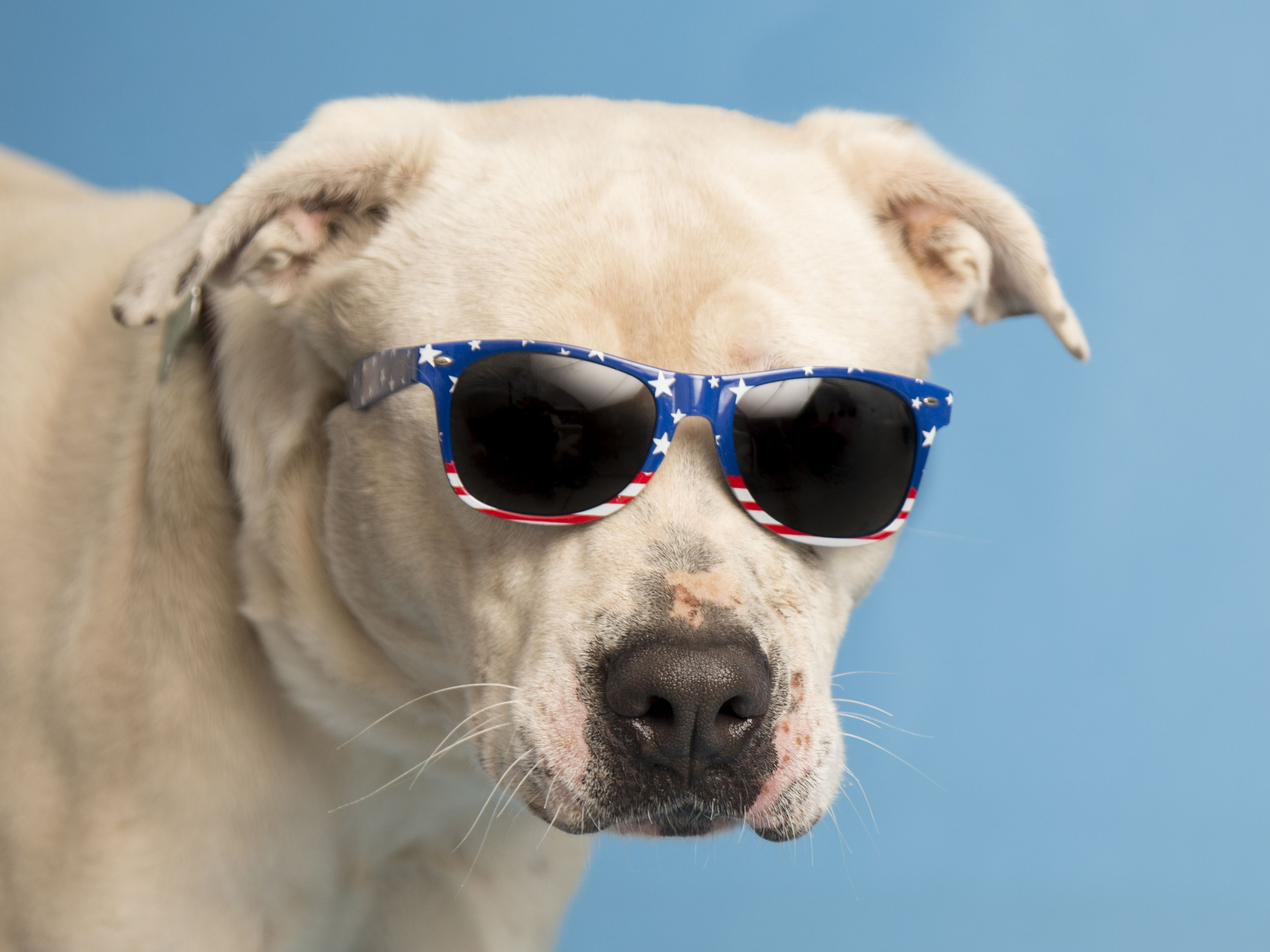 Adoptable pup, Spike, is ready for the weekend. Meet this