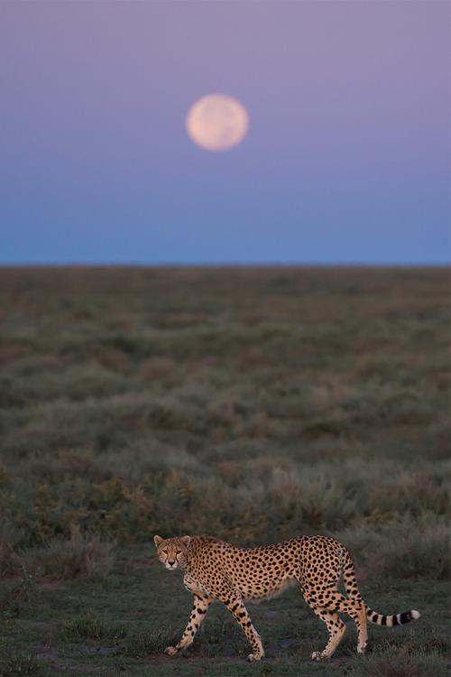 Full moon over Ndutu - Tanzania, Africa (by bart...