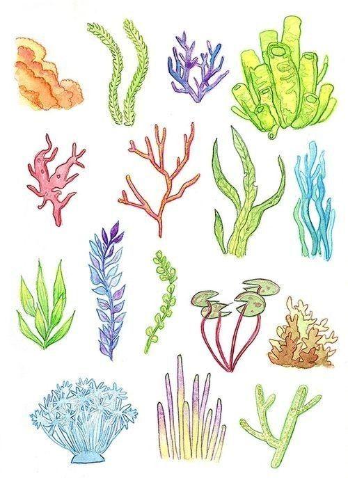 Pin De Thelma En Ocean Sea Life Tropical Scrap Paper Algas Marinas Dibujo Arrecifes De Coral Arrecife De Coral