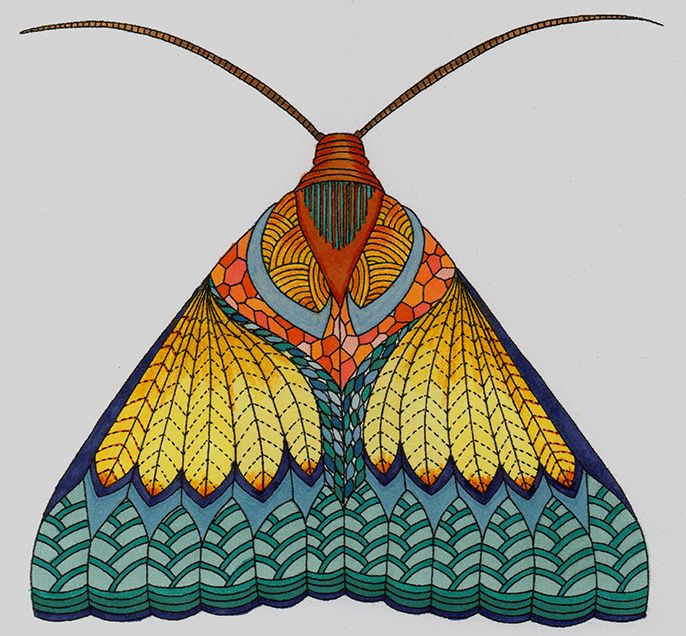 Moth Colouring Page From Animal Kingdom By Millie Marotta Millie