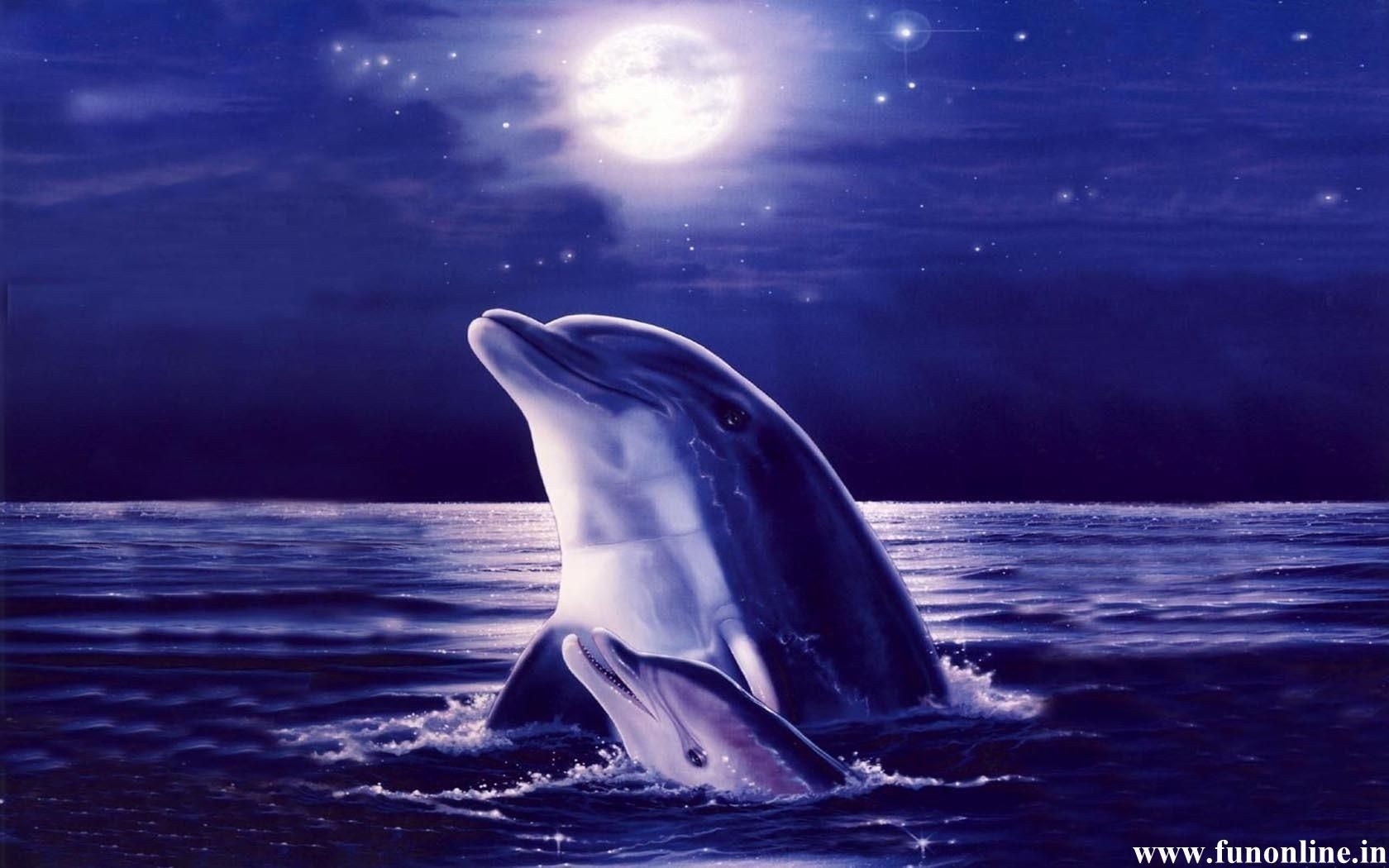 Animated New Moon Dolphin Wallpaper Jpg 1680 1050 Dolphin Images Dolphins Dolphin Art
