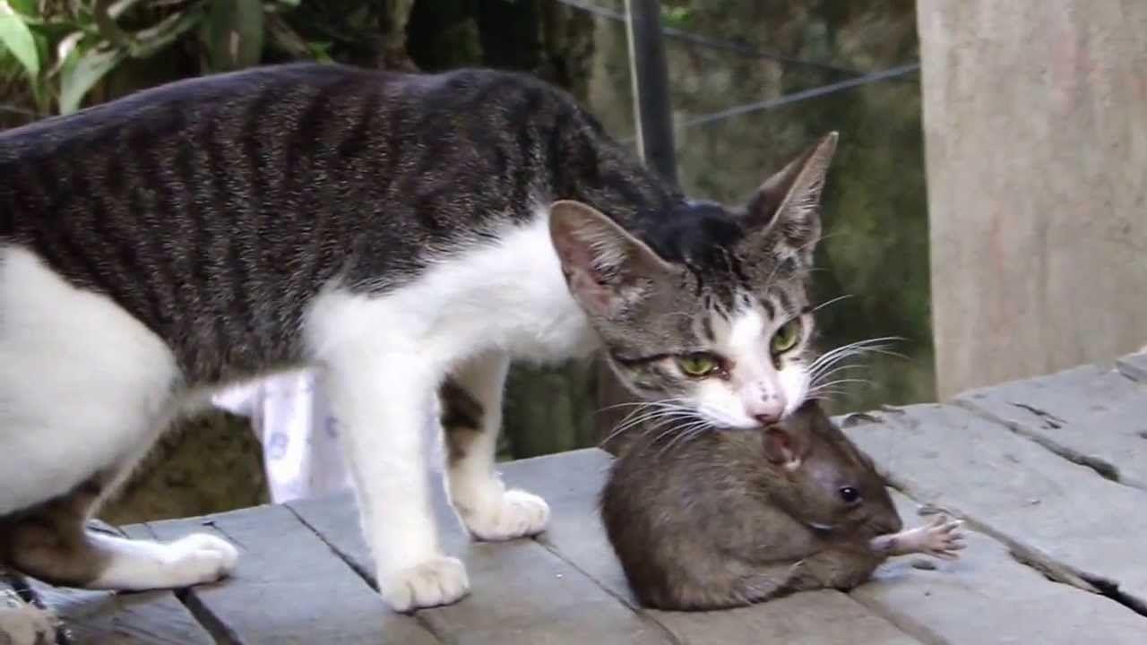 Pin On Grumpy Cats
