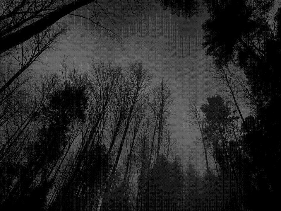 Dark Night Hd Black Wallpapers For Laptop With High Resolution Dark Wallpaper Dark Backgrounds Forest Wallpaper