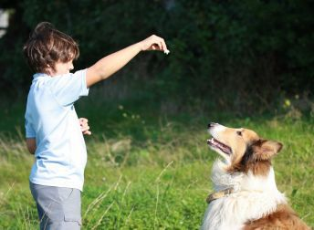 Dressage chien : 10 trucs essentiels pour dresser un chien