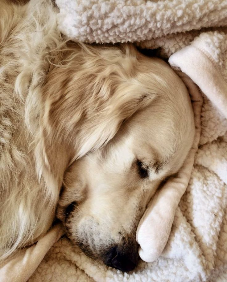 Winter Nap Cute Dogs Dog Love Dogs