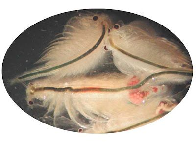 Sea Monkeys Unplug Your Kids Sea Monkeys Brine Shrimp Easy Pets