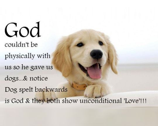Dog Love Quotes 26 Dog Quotes About Love And Compassion | Luke | Dog quotes, Dogs  Dog Love Quotes