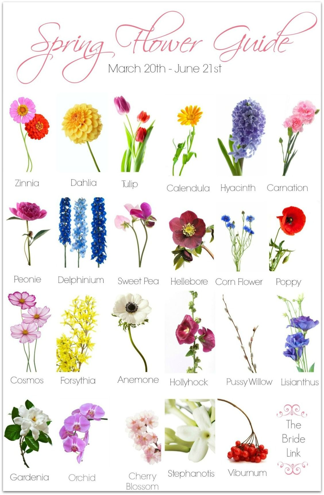 Spring Wedding Flower Guide Plants Centerpieces Pinterest