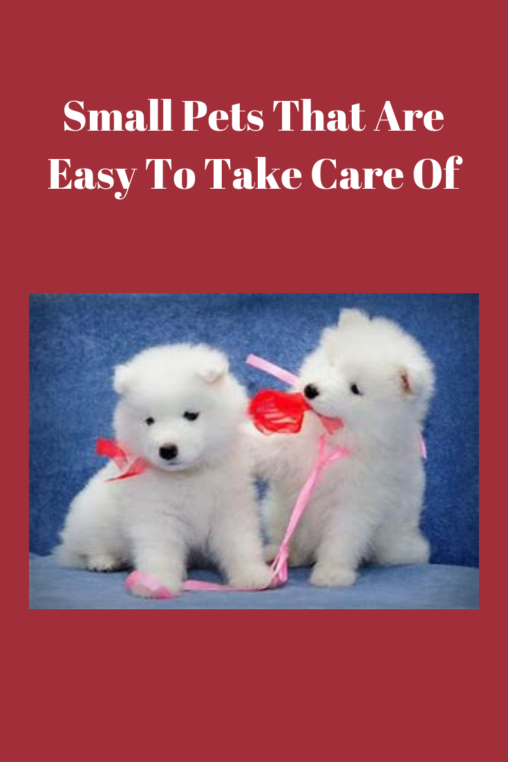 Small Pets That Are Easy To Take Care Of Pets Care Tips Pet Care Low Maintenance Pets Small Pets
