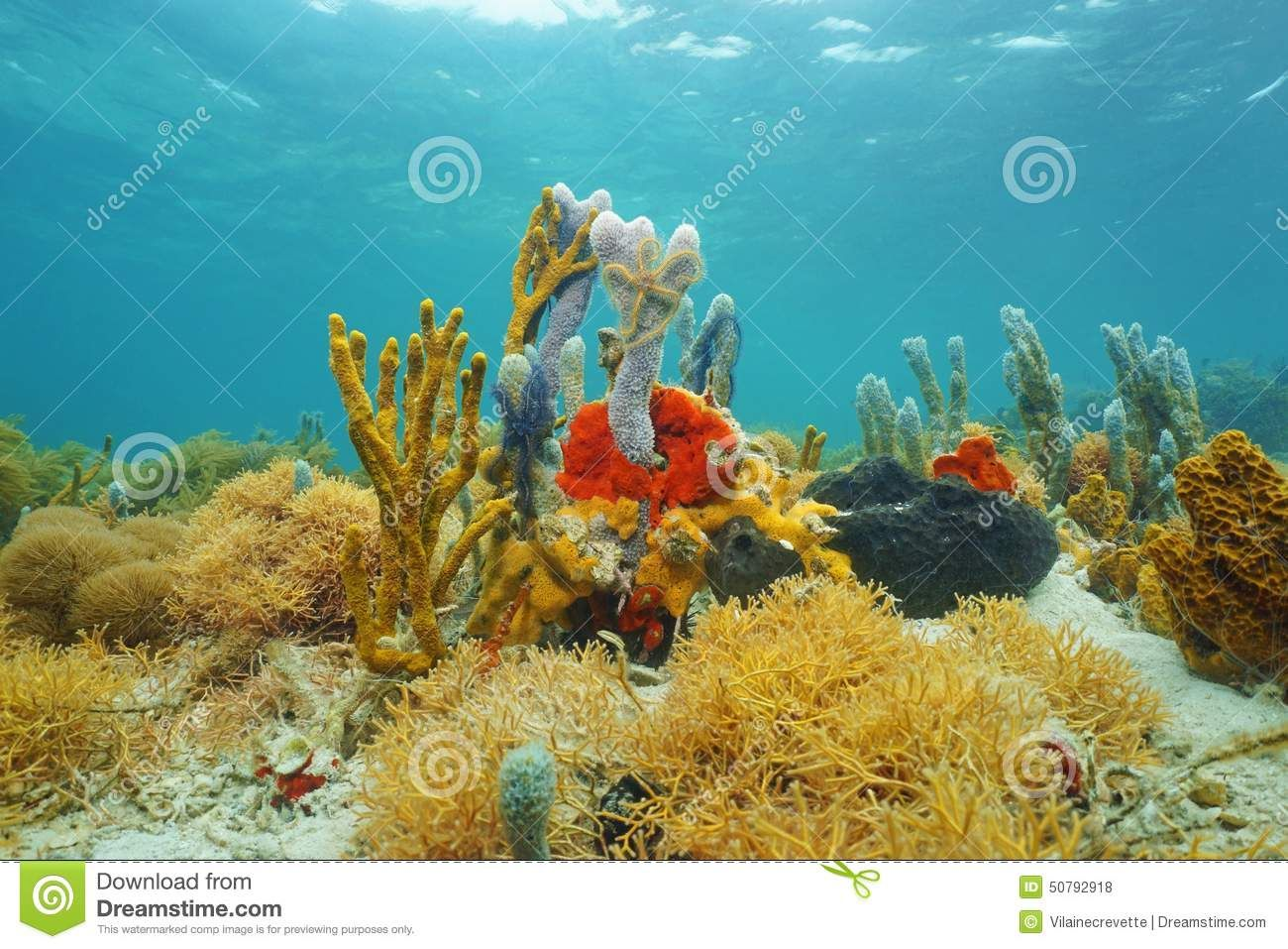 Google underwater theme - Under The Sea Real Life Google Search