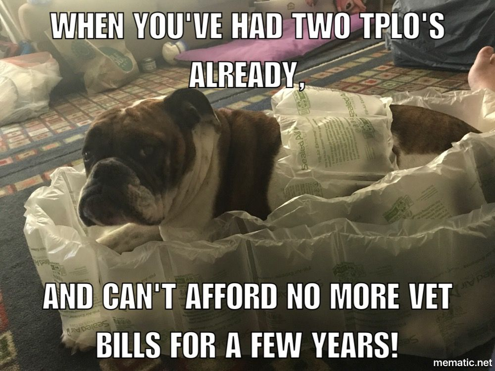 TPLO surgery/recovery. What every dog owner has thought of