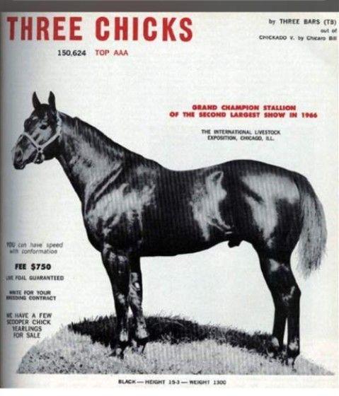 Image result for THREE CHICKS quarto de milha