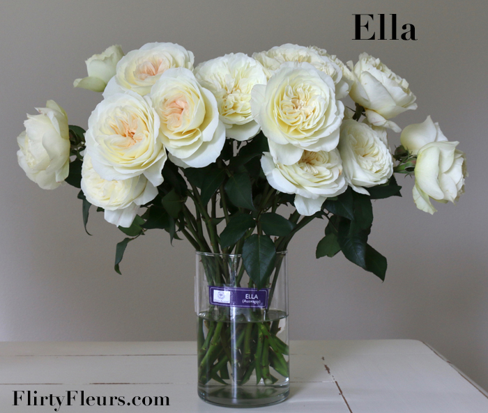 Ella David Austin Rose With A Long Vase Life David Austin David Austin Roses Rose