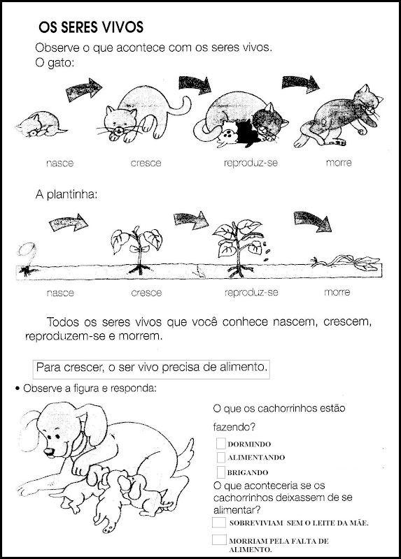 Pin De Grettel Masis Valverde Em Ciencias Atividades