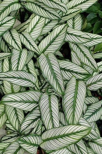 House Plant Leaves With A Lovely Pattern Pretty Patterns