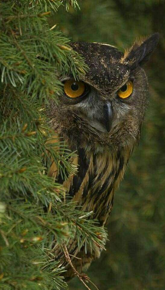 Owl has no time for your nonsense.