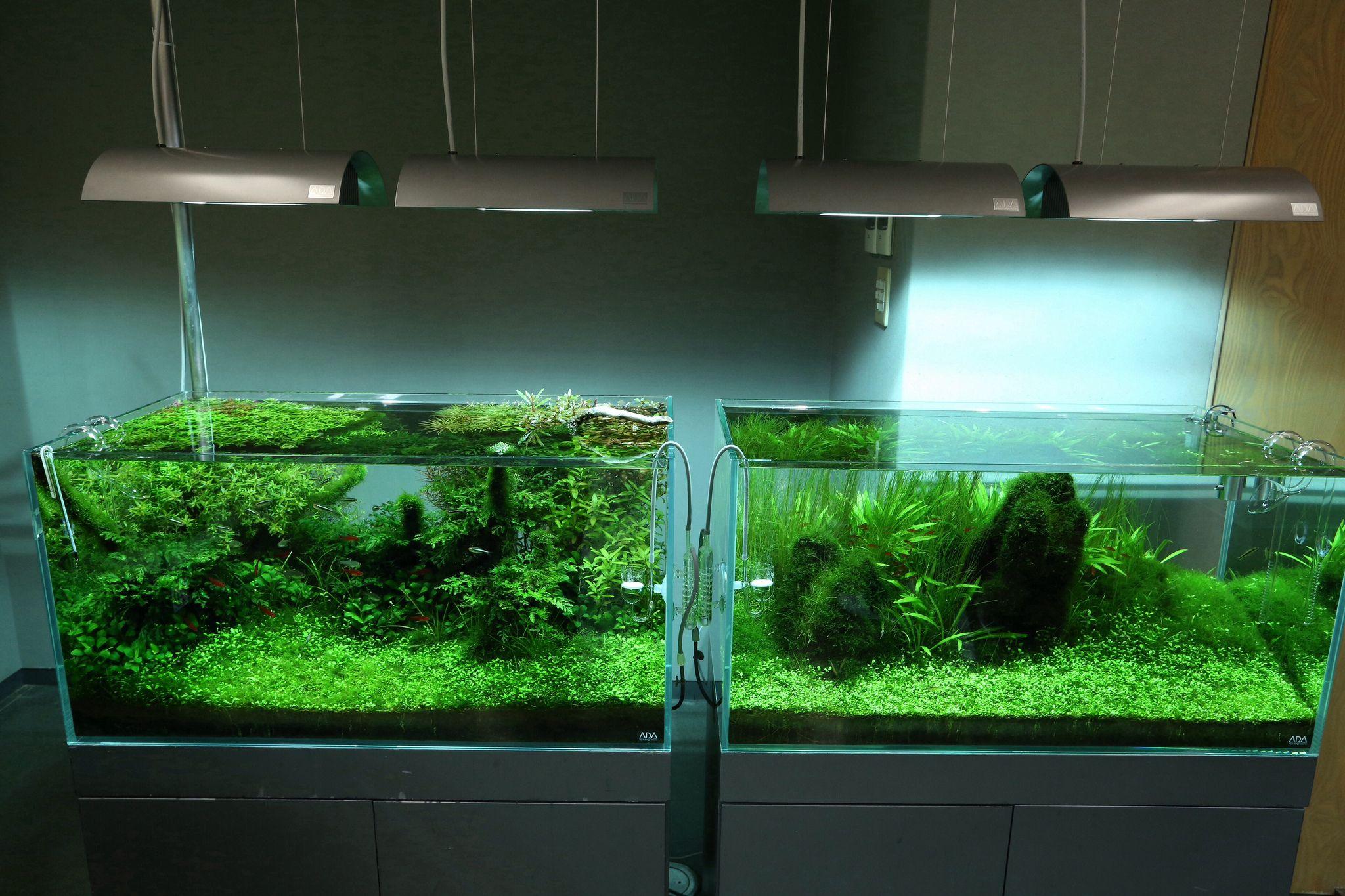 Nature Aquarium, Planted Aquarium, Aquarium Ideas, Fish Tanks, Aquascaping, Terrariums,