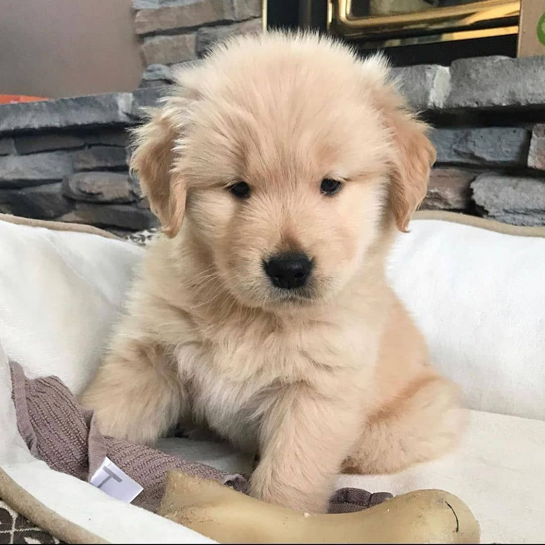 Dog Idea Dog Homes Dog And Baby Dog Projects Dog Cat Dog Ate Dog Home Ideas Home Dog Dog And Puppy Puppy Dog Dog Cute Dog Dog En 2020 Animaux Chaton Mignon