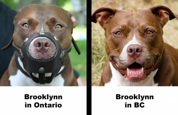 He City Of Montreal In Quebec Canada Is About To Adopt Harsh New