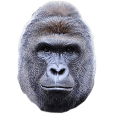 Image Result For Gorilla Face Png Harambe Gorilla Face Stickers