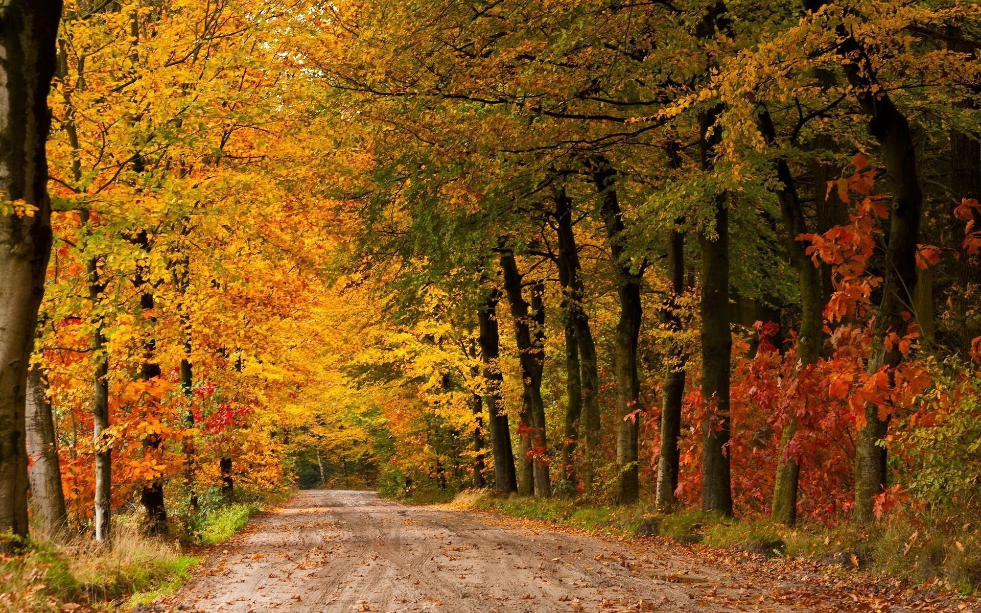 Trees.  Autumn. Yellow.