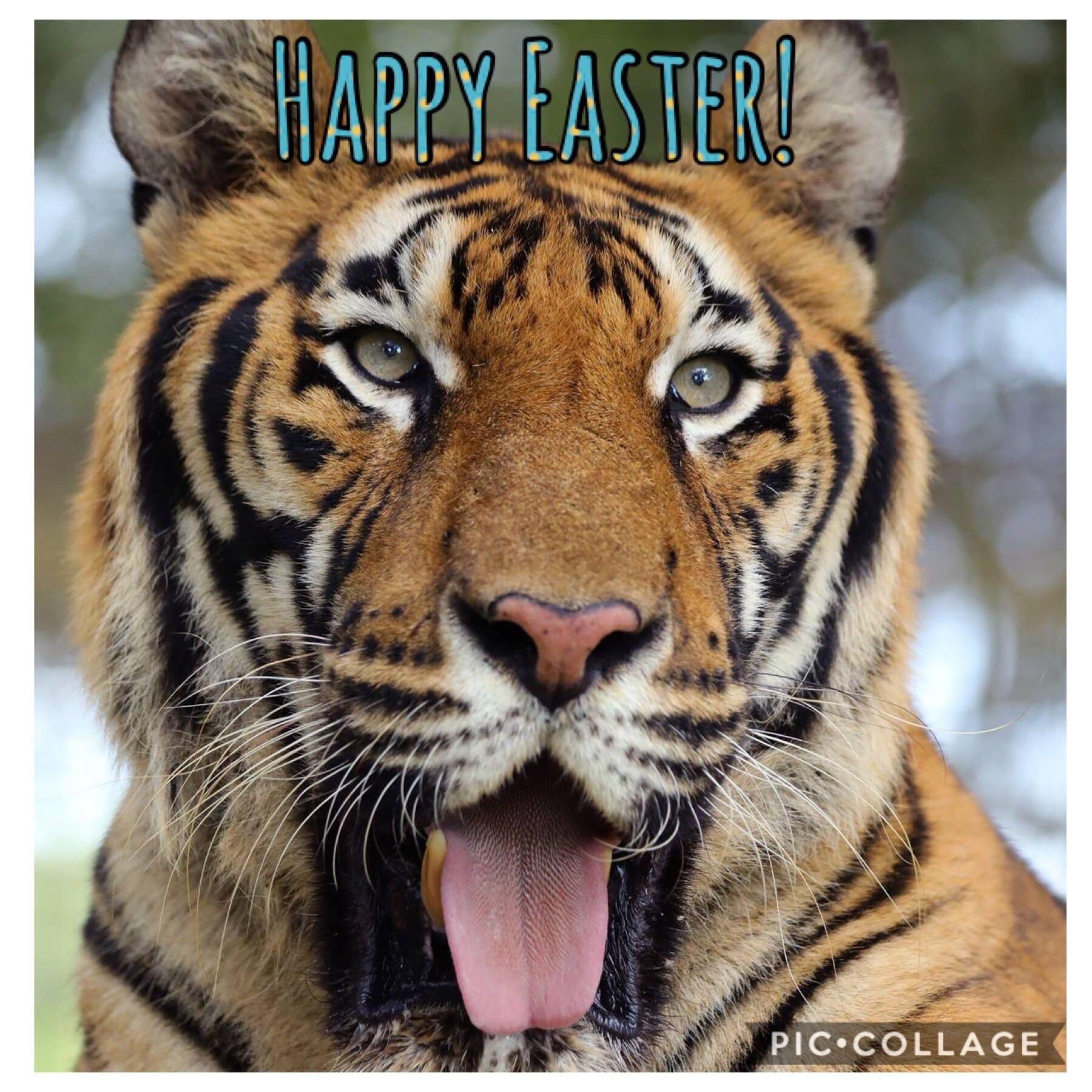 Good morning Reddit! Handsome Hoover Tiger would like to