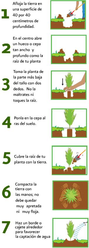 35++ Consejos para plantar arboles trends