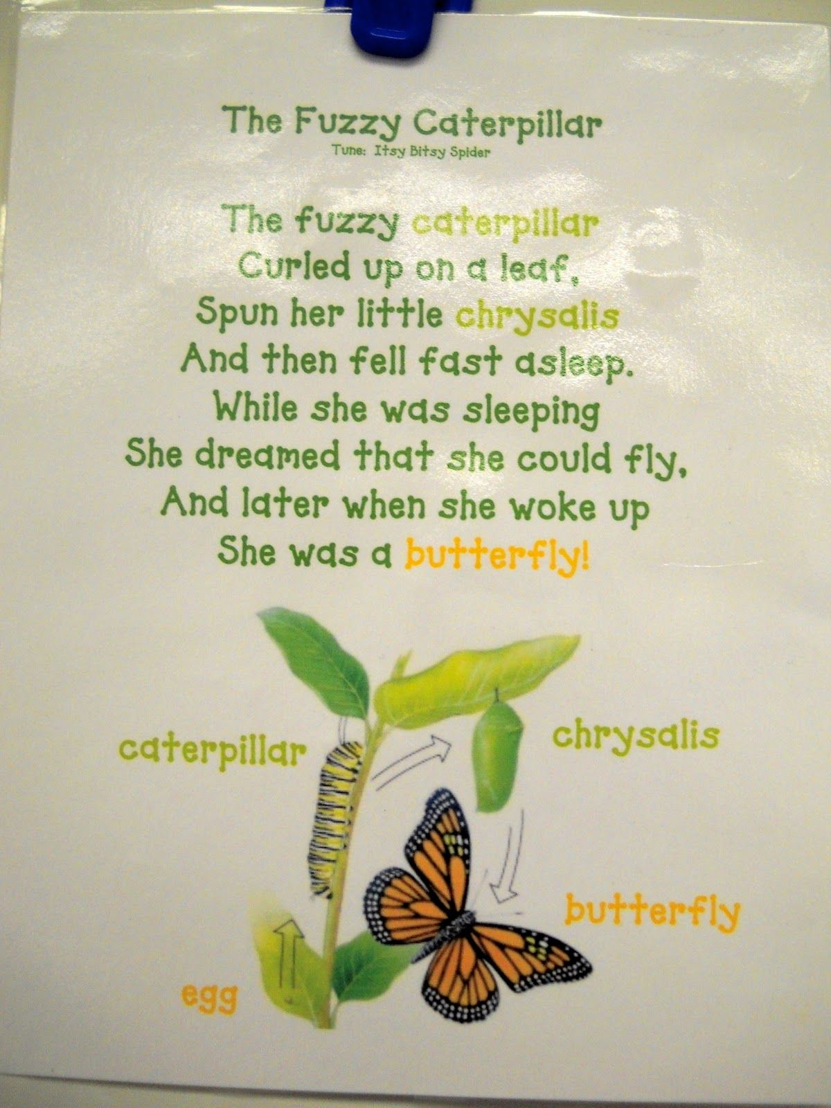 We read Eric Carle\'s The Very Hungry Caterpillar , which is just a ...