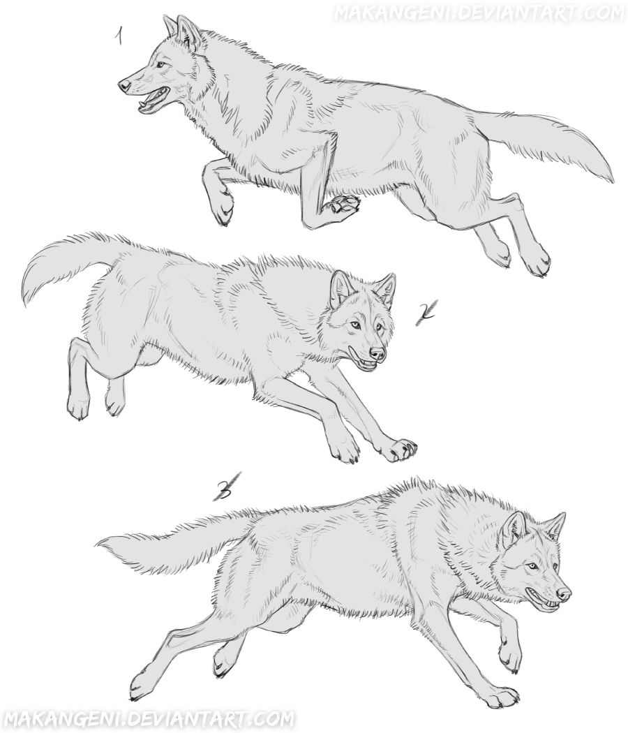 Photo of YCH Wolves 7 – SOLD by makangeni on DeviantArt