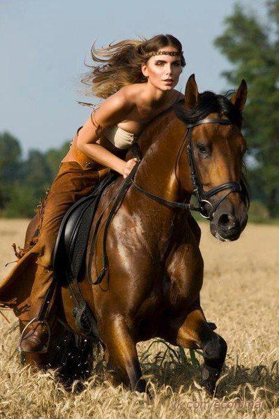 Новости | кони | Лошади, Красивые лошади и Боевые лошади