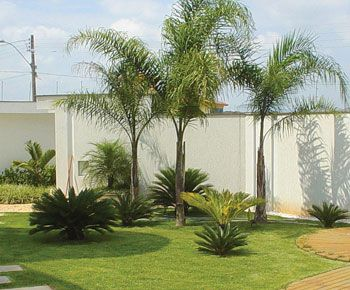 Jardin Con Palmera Pindo Buscar Con Google Jardin Con Palmeras Jardines Jardines Tropicales