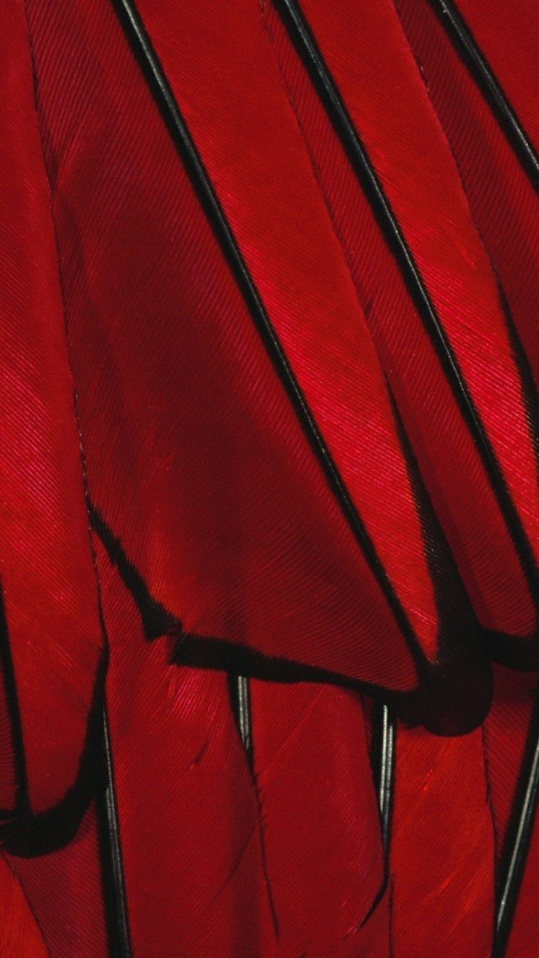 1080x1920 Black Red Paint Color Feather Iphone 6 Wallpaper Red