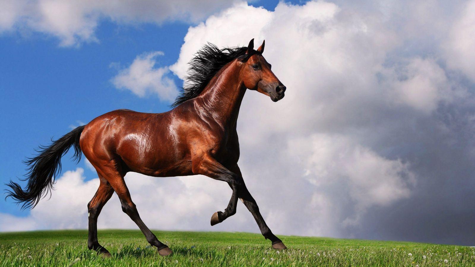 Beautiful Wallpaper Horse Desktop Background - 590818019717f87e927e919128c869ce  You Should Have_485685.jpg