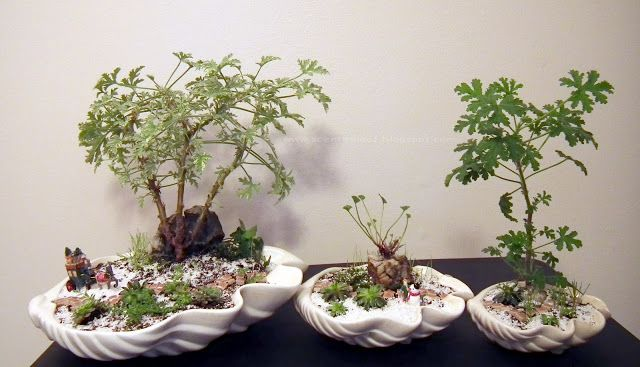 Scented Leaf: Fairy Gardens for Holiday Craft Fair 2011, Vancouver