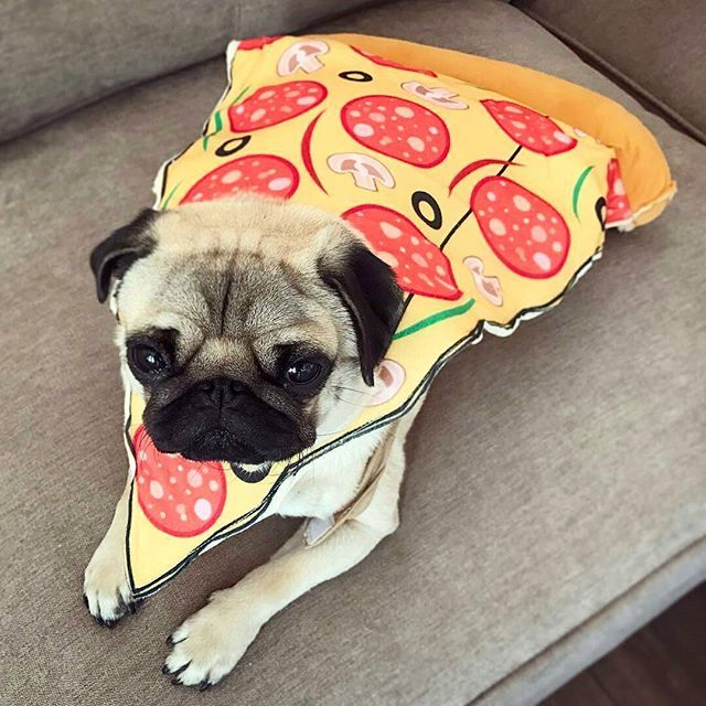 Pin By Lizette Santos On Ky Dogs Puppies Pugs Dogs