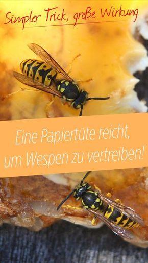 Photo of Wespen loswerden: Wie eine Papiertüte Wespen vertreiben kann