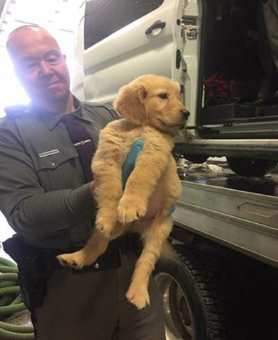 More Than 100 Puppies Were Rescued After The Delivery Vehicle In