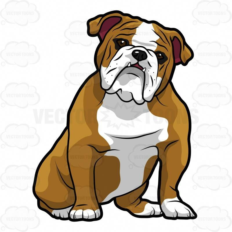 English Bulldog Sitting With Its Head Tilted To The Right