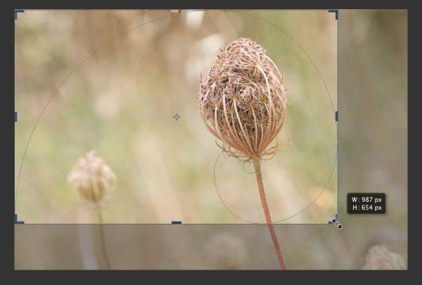 Fibonacci, Nautilus Shells, and Photography