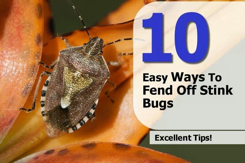 10 Easy Ways To Fend Off Stink Bugs Tips Ideas