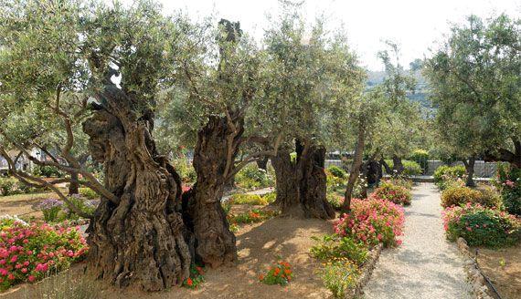 590ae227e14ad0e888c9eebddb6710b6 - Gardens Of Gethsemani Plots For Sale