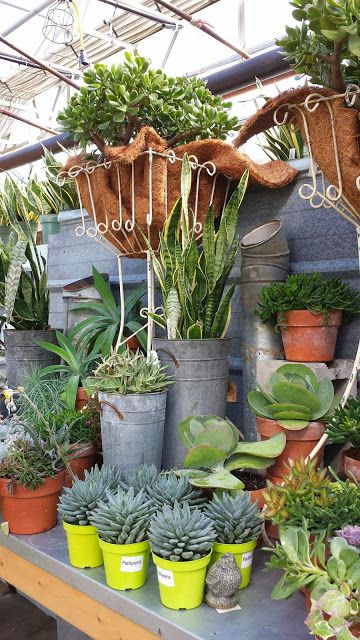 i love my garden warm up in a greenhouse things that grow rh pinterest at