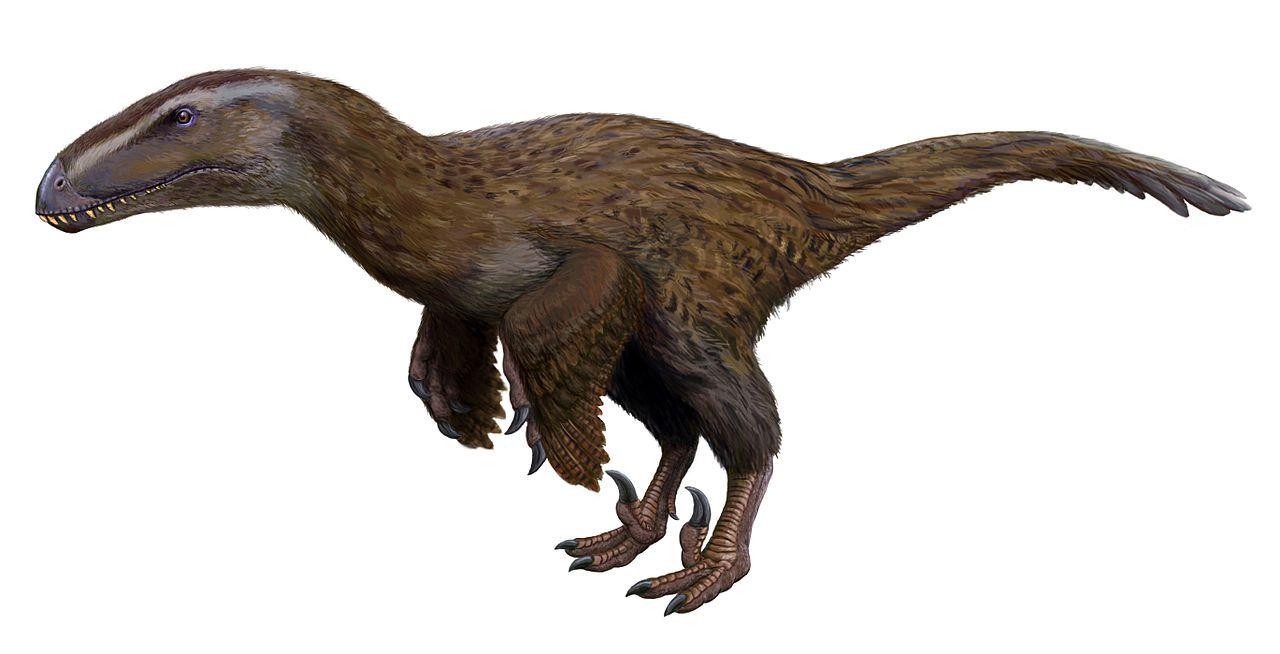 Dromaeosauroides 似馳龍 Dinosaur Pictures Prehistoric Animals Paleo Art
